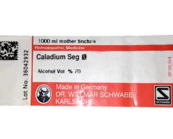 Caladium-Seg-Q--g