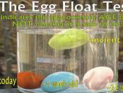 egg-float